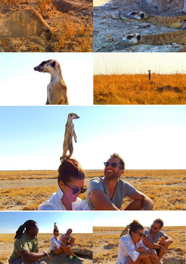 Top Travel visits the Meerkats of the Kalahari Desert